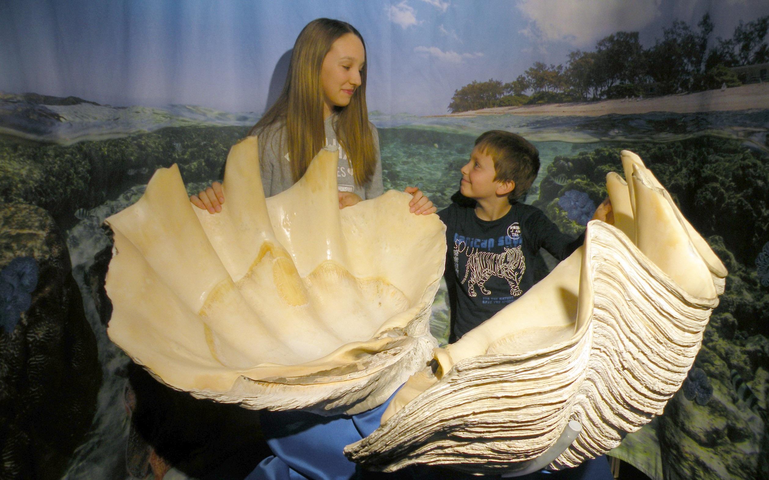 Muzej školjk in polžev