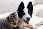 hotel za pse in mačke
